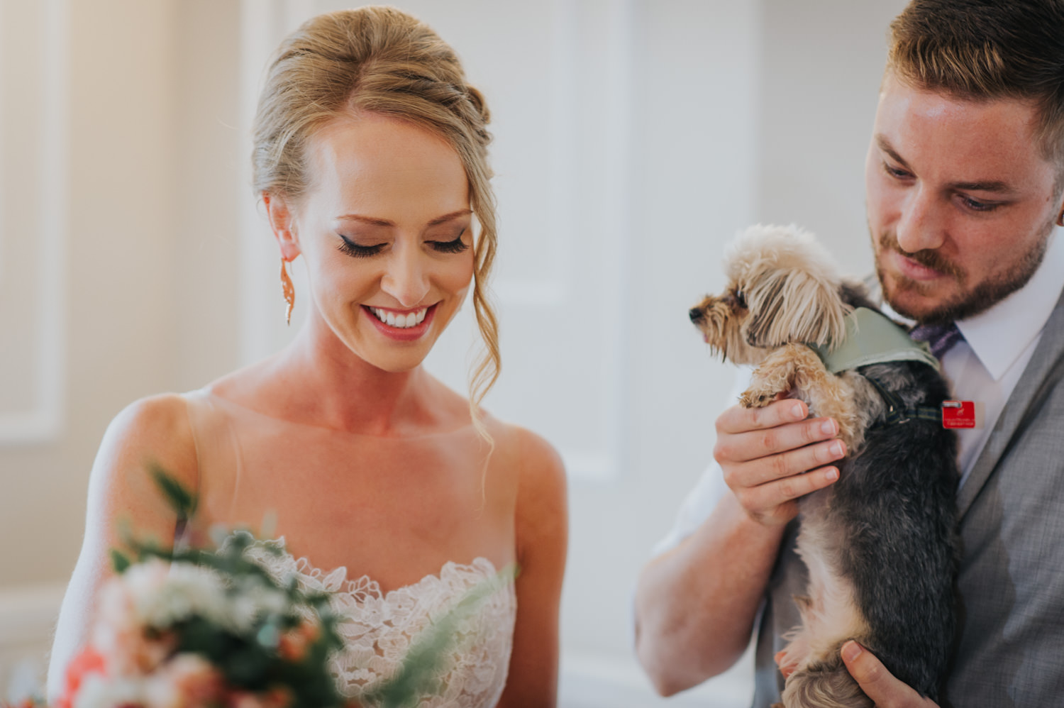adorable yorkie stamp his paw on the marriage license