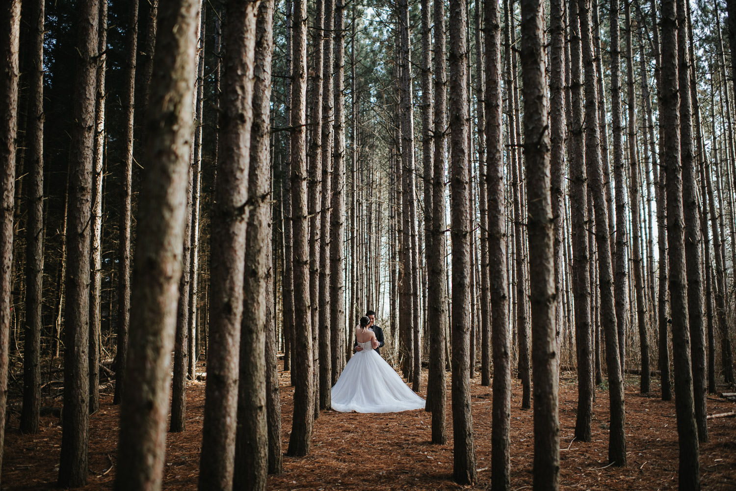 Kortright Conservation Wedding Photo Pine Forest